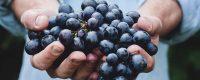 grapesinhand